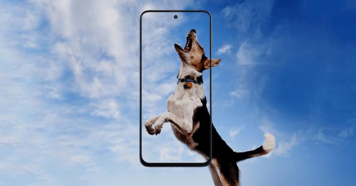 Samsung Galaxy 31s FAQ